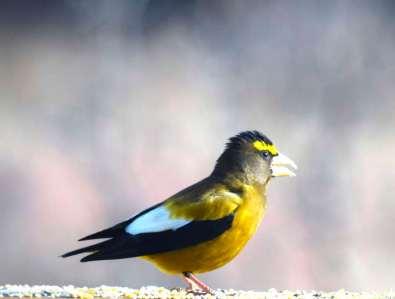 bird talk 19